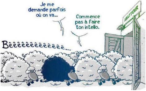mouton-conformisme.png